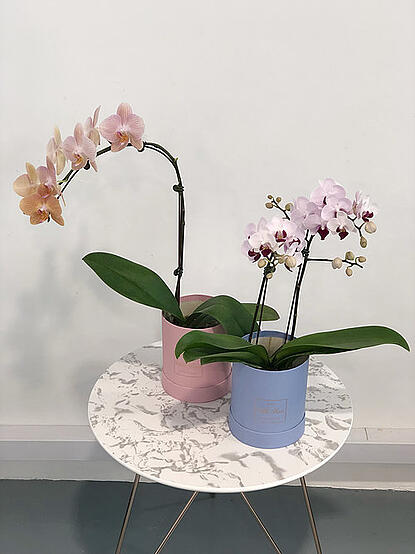 Mothers Day Gift - Orchid