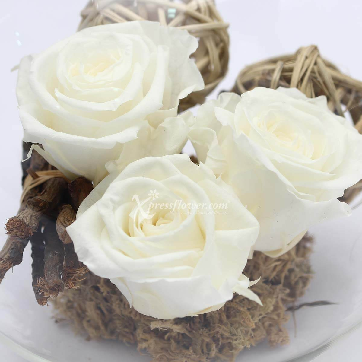 Valentine's Gift for Wife - Girlfriend - Moonlight Rose